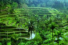 Bali01b
